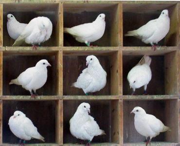 第 4 期什么是鸽巢原理(抽屉原理)?